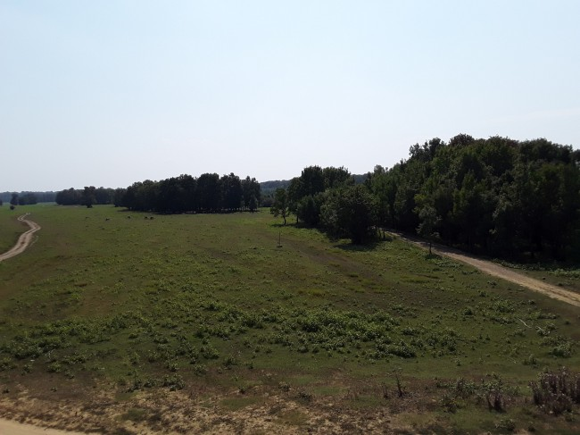 Lonjsko polje 3-min